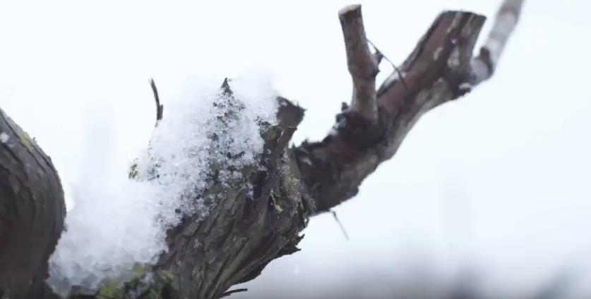 les saisons des le vignoble du Val de Loire
