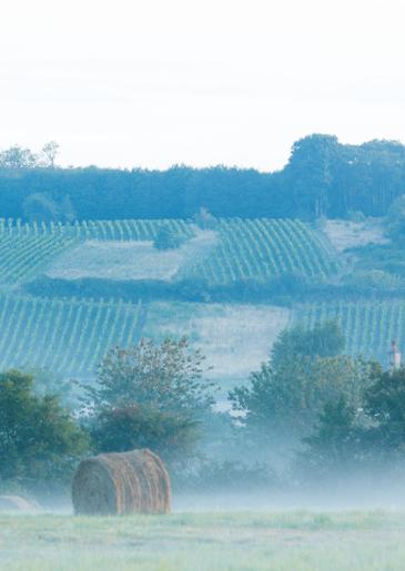 vin val de loire Jasnières