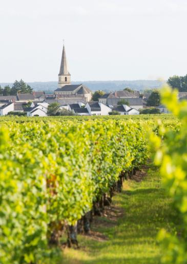 vin val de loire saint nicolas de bourgueil