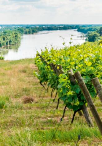 Affiche du Muscadet Coteaux de Loire, un vin offrant une palette d'arômes très nuancés