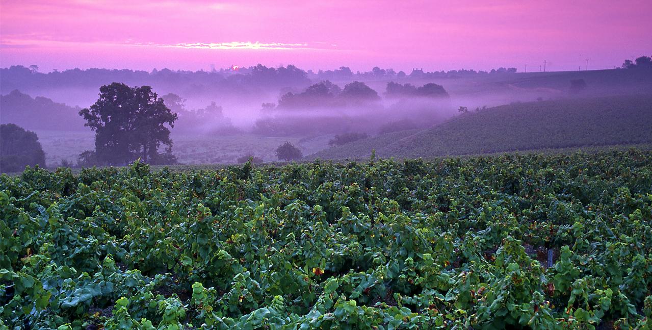 Coucher de soleil sur les vignobles