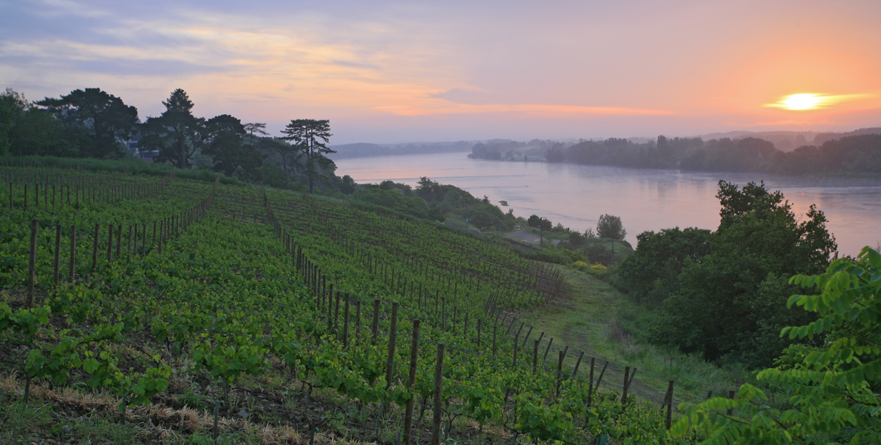 Sunset over the vineyards and banks of the Loire