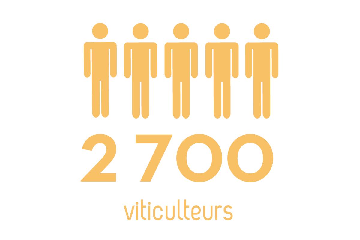 Infographie recensant le nombre de viticulteurs